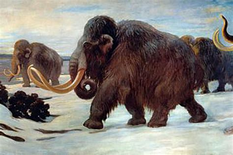 Woolly mammoths experienced a genomic meltdown just before
